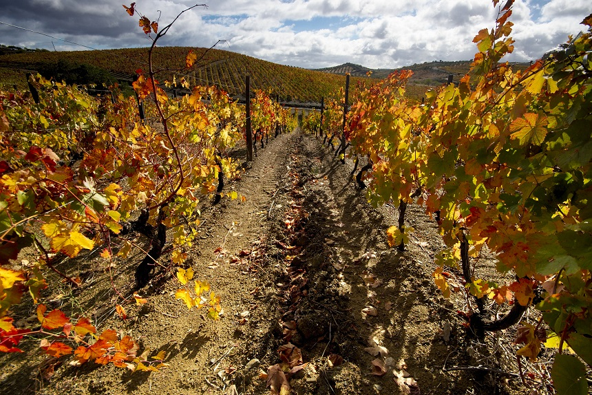 Portugal in the Fall: Duoro Vineyard